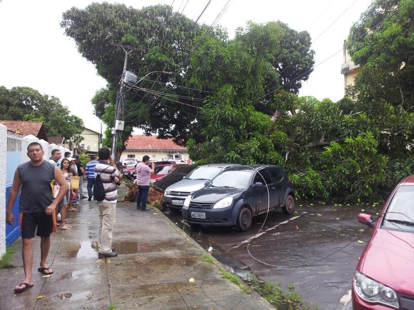 Árvore caída sobre carros no Centro de Macapá. Foto: Alcinéa Cavalcante