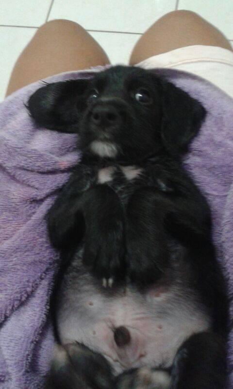Luiz quando foi adotado pela família