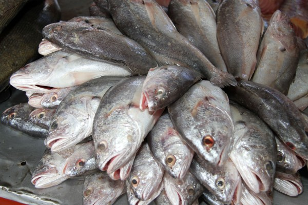 Serão vendidas 200 toneladas de peixe mais barato