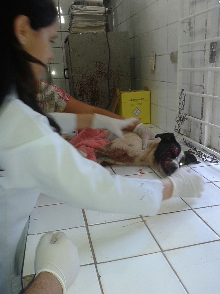 Cachorro que foi resgatado