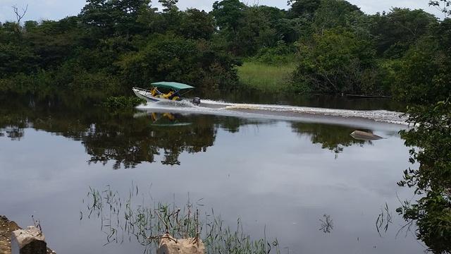 Equipe da empresa que constrói a hidrelétrica vasculha pequenas ilhas a procura de animais isolados