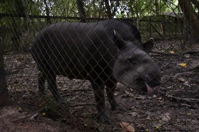 As crianças conheceram o maior mamífero terrestre do Brasil, a anta