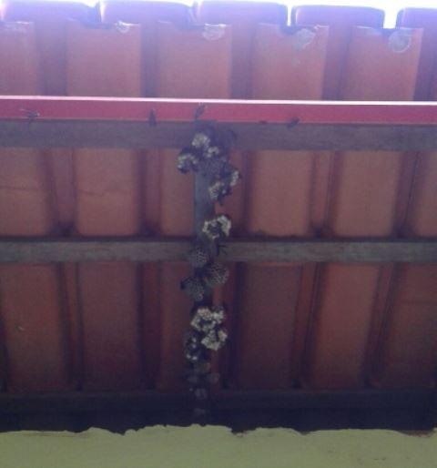 Ninhos de cabas. Fotos cedidas por conselheiros