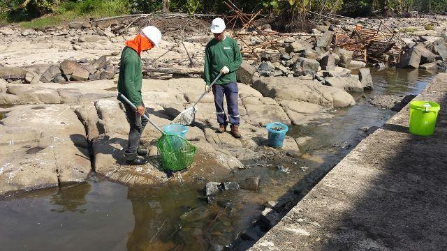 Funcionários da construtora ajudam a recolher os peixes mortos