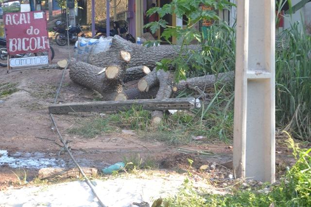 Na noite de domingo uma árvore caiu derrubando um poste e toda a fiação elétrica. Fotos: André Silva