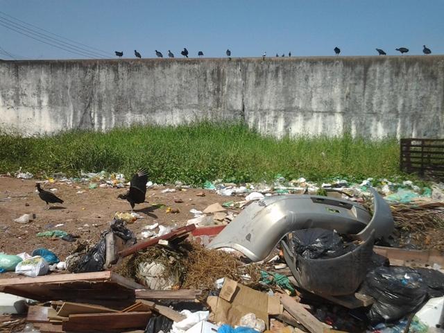 Os urubus dominam o espaço tomado pelo lixo. Fotos: André Silva