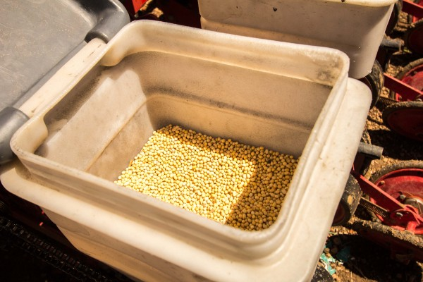 Os alimentos produzidos serão adquiridos através de programas federais