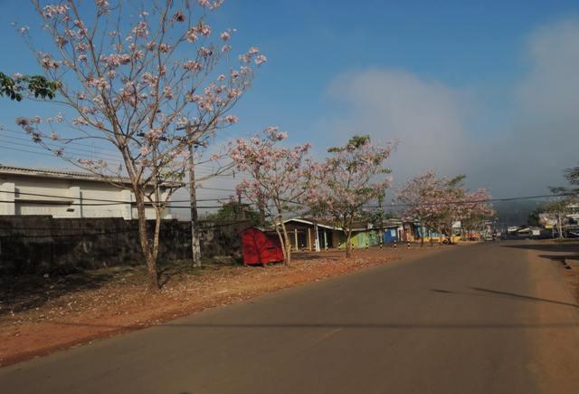 As árvores percorrem a rua no Centro de Oiapoque. Fotos: Humberto Baía