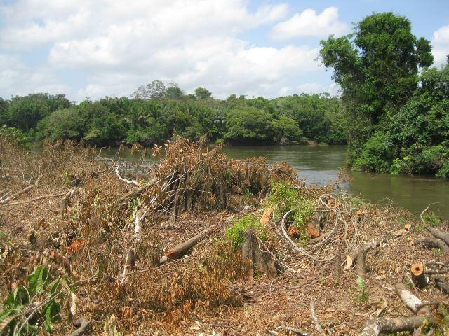 Unidades e reservas indígenas ajudam a conter o desmatamento no Amapá