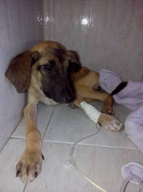 Este ano a ONG Anjos Protetores já tirou das ruas cerca de 500 animais