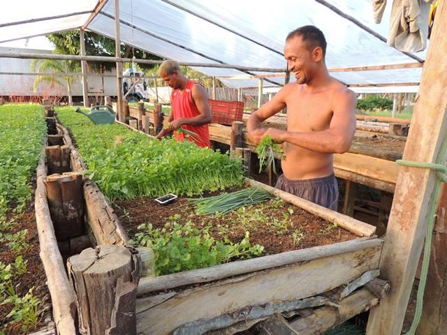 Produtores construíram hortas elevadas para facilitar o menejo