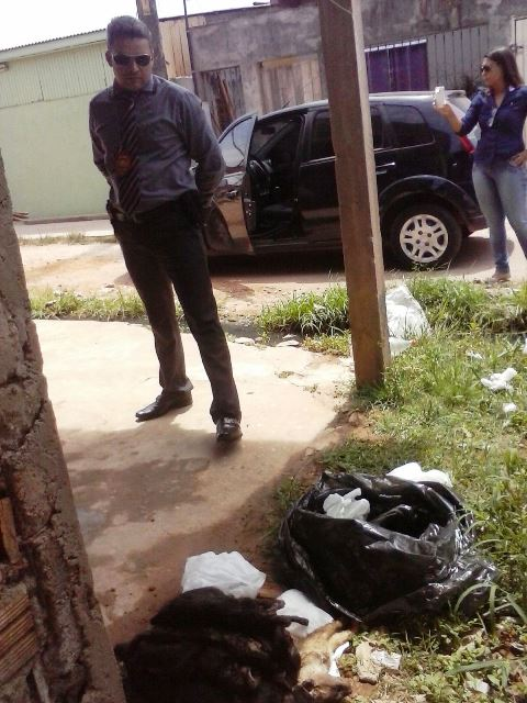 Delegado Sávio Pinto observa os gatos mortos. Fotos cedidas pela Polícia Civil