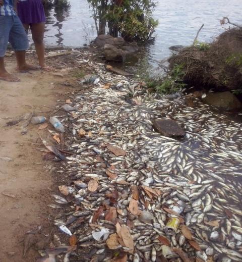 Centenas de peixes amanheceram boiando no rio em 2015. Foto: arquivo/SELESNAFES