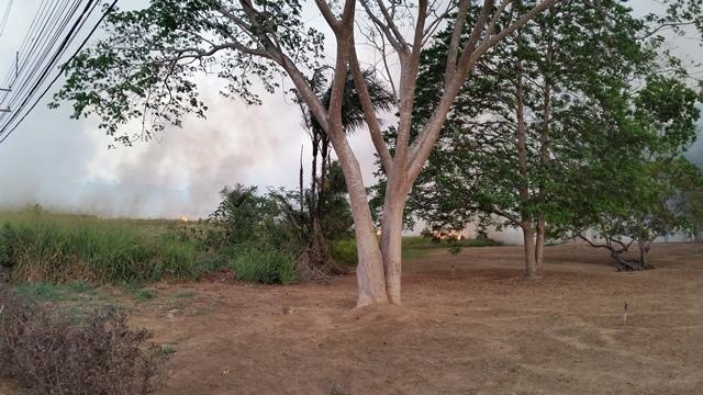 As chamas começaram no início da tarde e ficaram intensas. Imagens: Seles Nafes