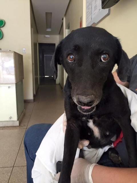 Cadela terá que passar por uma cirurgia na vulva. Fotos cedidas pela ONG Anos Protetores