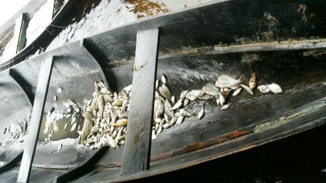 Pescadores estão recolhendo peixes, mas dizem que funcionários da hidrelétrica já recolheram a maior parte
