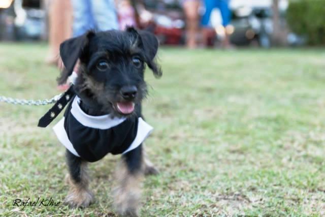 Além do concurso, haverá uma feira de adoção de cães e gatos. Fotos: Divulgação