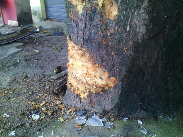 Carro bateu numa árvore em uma parada de ônibus. Ninguém ferido