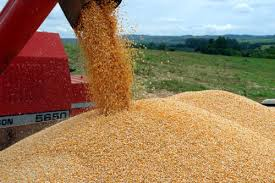 Duas fábricas já receberam terras para fabricar ração de soja