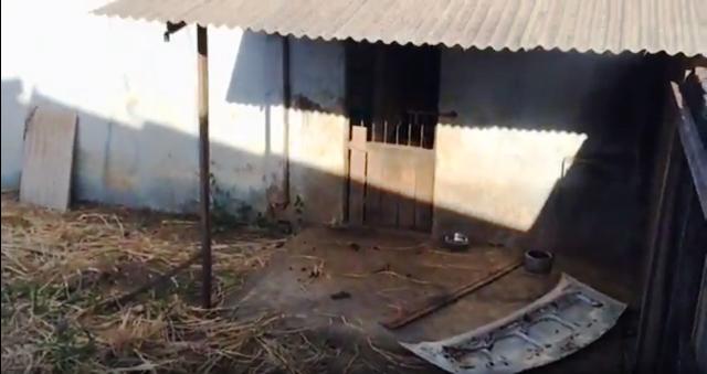 Canil municipal está depredado e tomado por mato