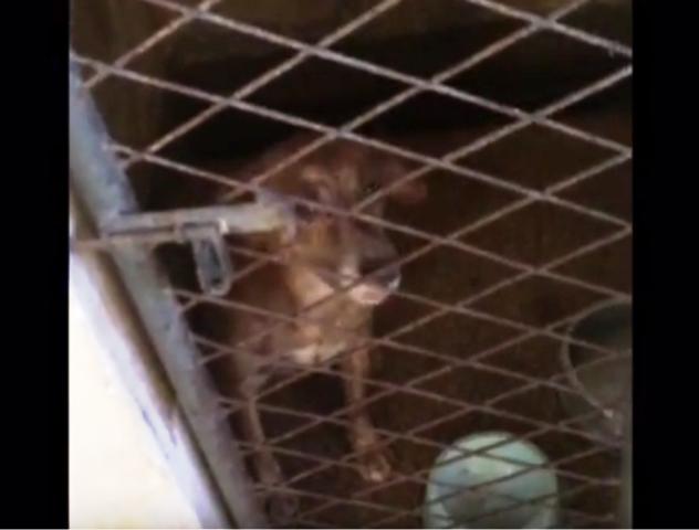 Cão encontrado preso sem água e ração