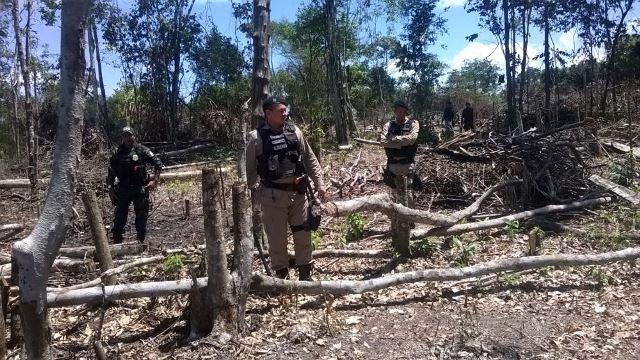 Agosto de 2015: Guarda Civil descobre grande área desmatada. Foto: Arquivo