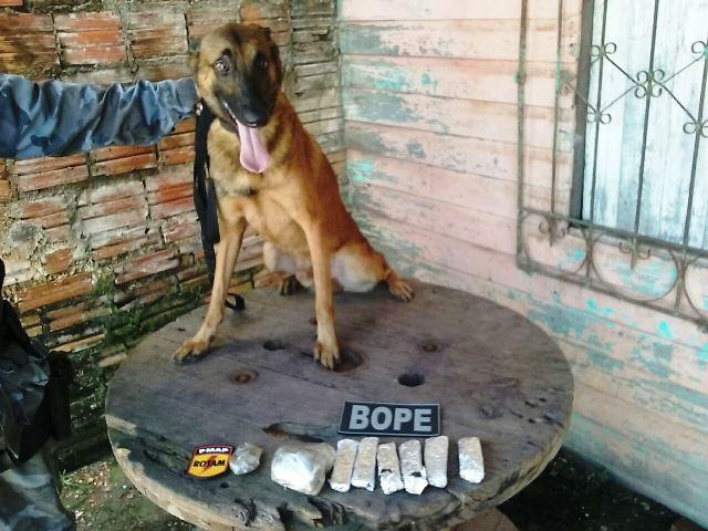 Cão farejador Vulcão encontrou as drogas
