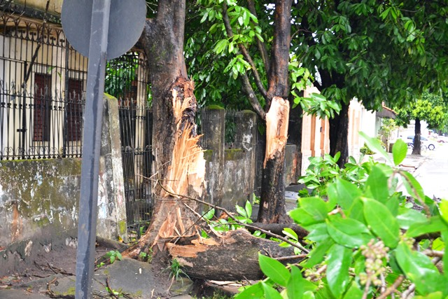 A força do vento quebrou o tronco ao meio