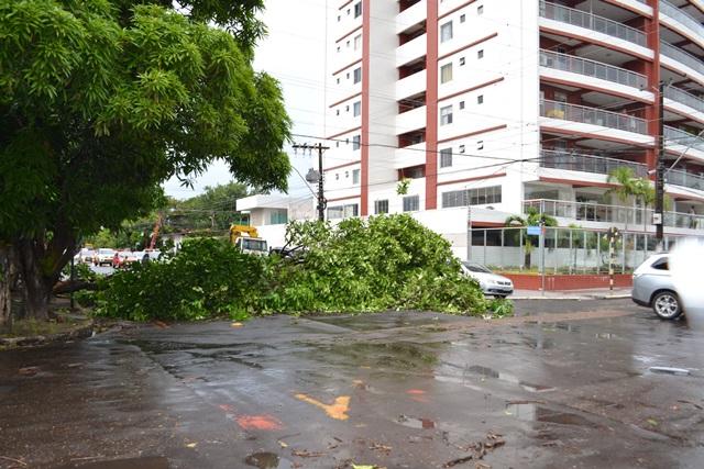Cruzamento da Rua Hamilton Silva com a Avenida Almirante Barroso: árvore quase bloqueou a rua
