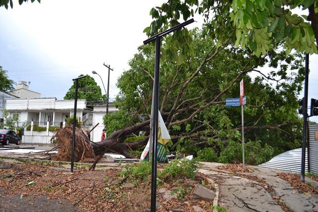 Árvore na Praça Floriano Peixoto foi arrancada...