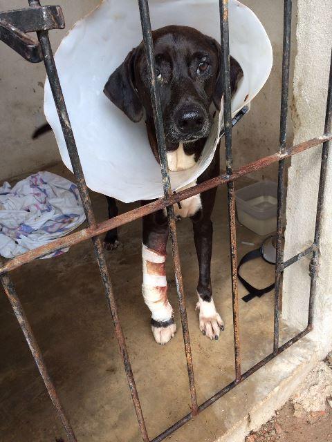 ONG cuida de mais de 250 animais