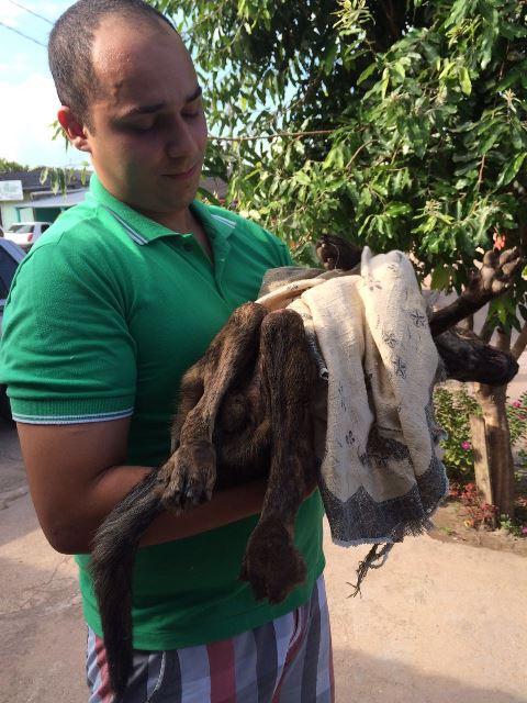 Atropelamentos de animais acontecem com frequência em Macapá
