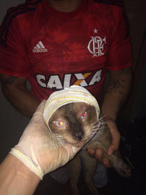Gato em recuperação após atropelamento