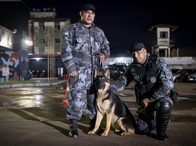 Cães farejadores são fundamentais para localizar drogas e armas escondidas. Foto: arquivo/SELESNAFES