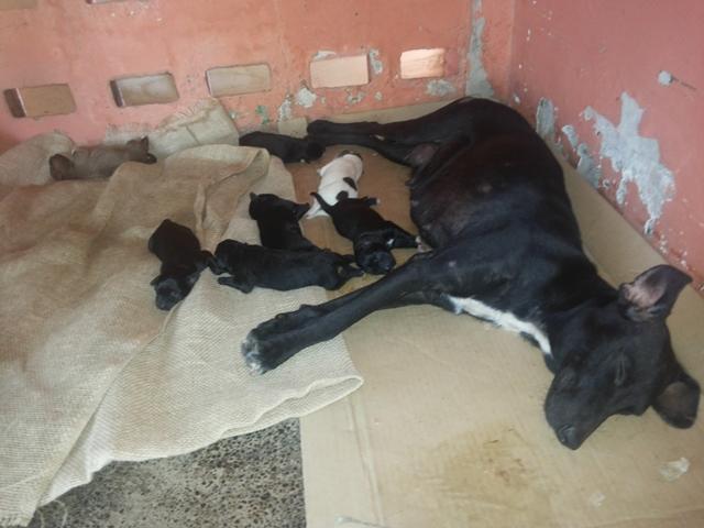 Cachorra teve quatro machos e três fêmeas. Fotos: Cássia Lima