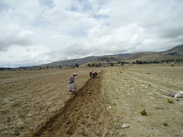 Mulher plantando sementes, no Peru