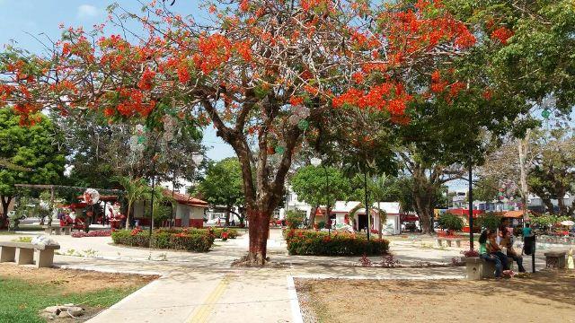 Ornamentação vai fazer a Praça Veiga Cabral brilhar neste Natal