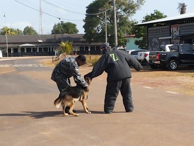 Salgado Neto conta sobre a dificuldade no treinamento de cão policial: roupa pesada e cansaço