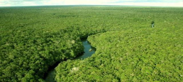 Floresta Estadual do Amapá. Foto: IEF