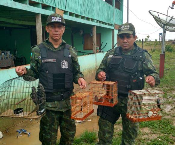 No total foram encontrados 15 pássaros, entre curiós e bicudos. Fotos: Batalhão Ambiental/Divulgação