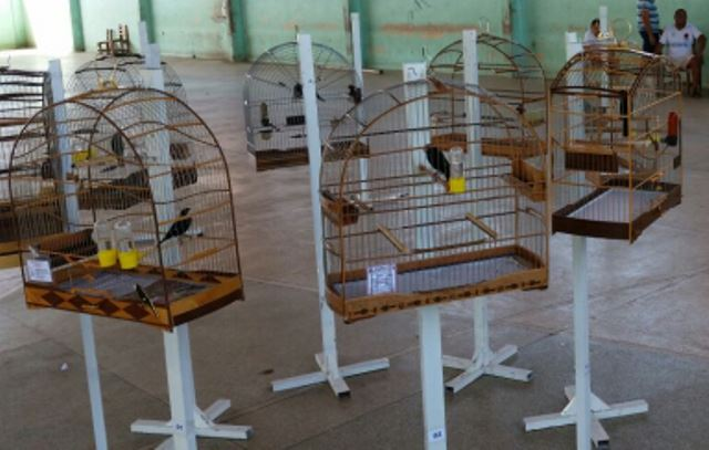 Associação de criadores de pássars (9)