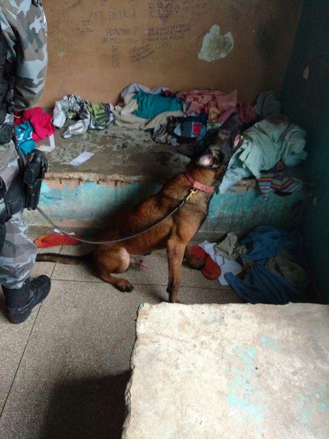 Cães farejadores ajudaram a encontrar materiais na ação. Fotos: Bope - Comunicação Social