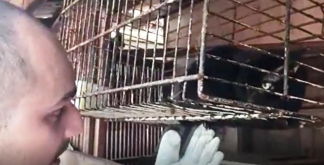 Gato criado numa gaiola pendurada no teto. Fotos: Reprodução