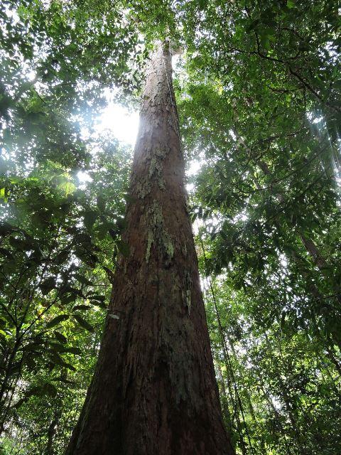 Efeito das ocupações humanas sobre a floresta pode ter sido maior