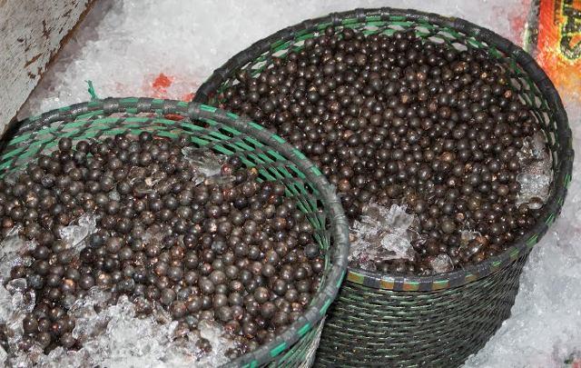 Açaí exportado é produzido por cooperativa do Bailique. Fotos: Secom/divulgação