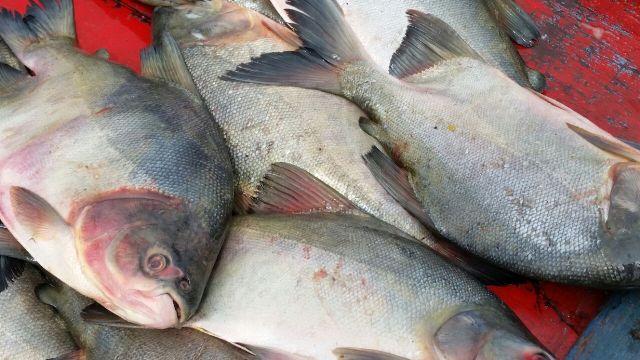 Projeto Peixe Popular do GEA chega nas feiras de Santana