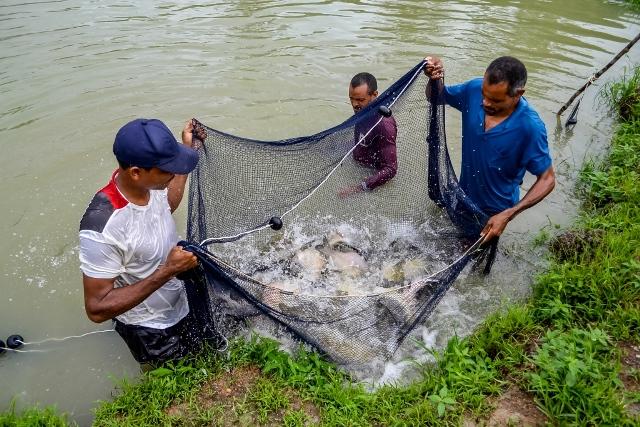 Peixes são de criadouros do Distrito do Coração, Fazendinha e KM 21. Fotos: ascom/PMM