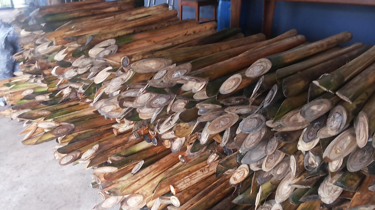 Palmito ilegal ia abastecer fábricas clandestinas