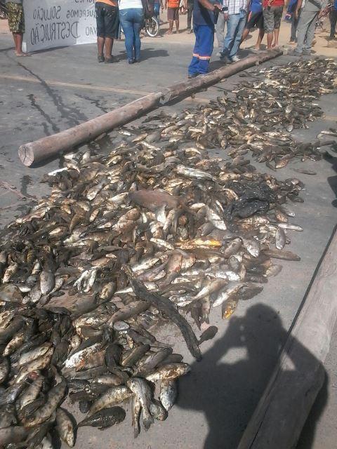 Pescadores usam peixes mortos para fechar BR-156