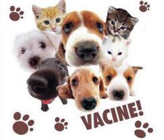 Sem atingir a meta, vacinação de cães e gatos é prorrogada